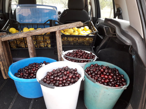 Buckets-of-organic-cherries