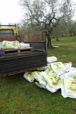 pelleted-manure-at-organic-olive-farm-Selvanuova
