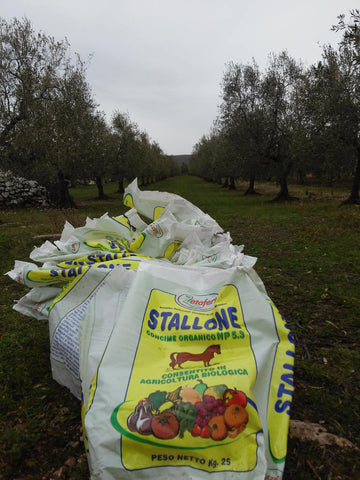fertilising-with-pelleted-manure-at-organic-olive-farm-Selvanuova