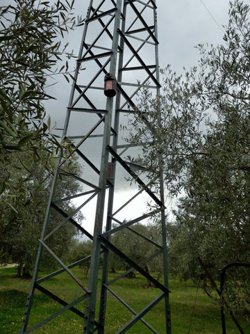 Nest box for tits and sparrows in an organic olive grove at Selvanuova