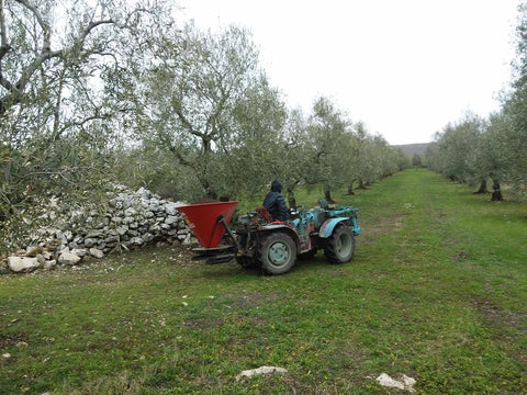 spreading-pelleted-manure-at-organic-olive-farm-Selvanuova-in-Italy