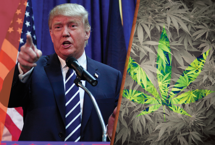 Trump to Legalize Marijuana Across the US?