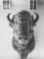 Load image into Gallery viewer, Black & White Bison Print