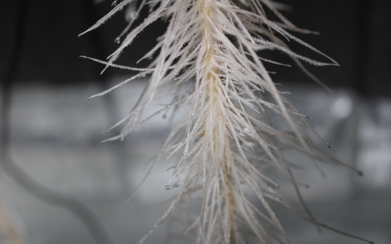Aeroponic fuzzy root hairs
