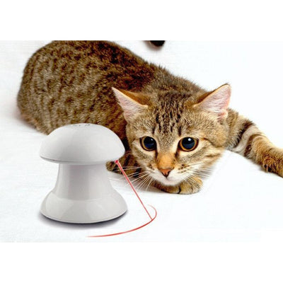 360 Cat Toy -  Gadgets - BuyShopDeals