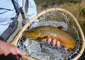 Brown trout held in hand crafted landing net.