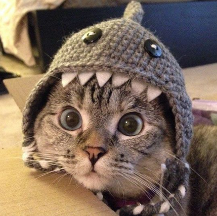 shark cat on land -MissMeowni.com