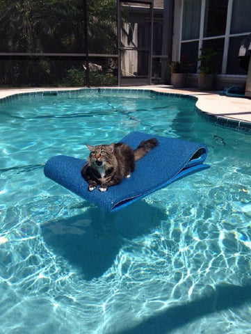 fraidy cat doesn't swim -MissMeowni.com