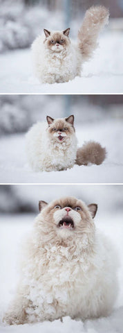 this cat discovers snow -MissMeowni.com