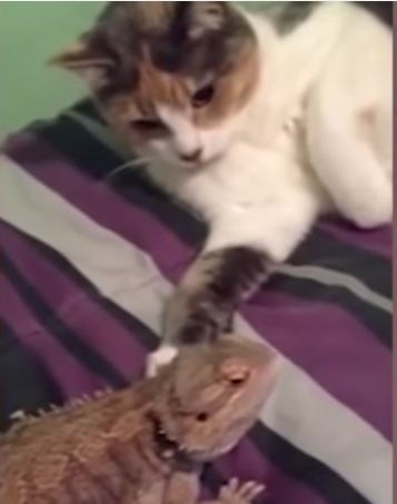 cat likes lizard -MissMeowni.com