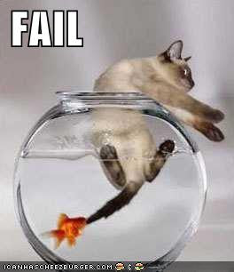 fish catches cat -MissMeowni.com