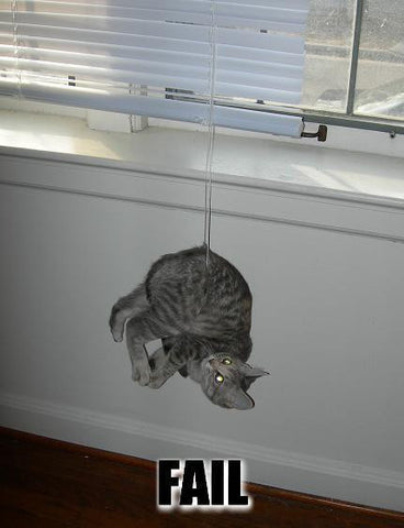 cat stuck in blinds -MissMeowni.com