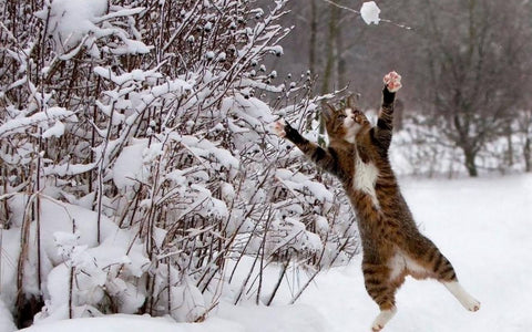 cat catching snowball -MissMeowni.com