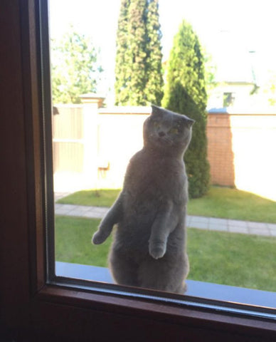 let me in -MissMeowni.com