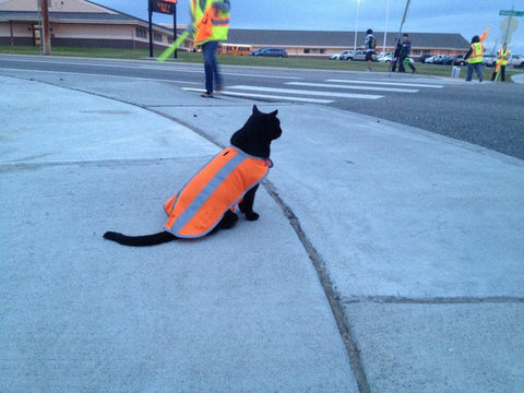 crossing guard cat -MissMeowni.com