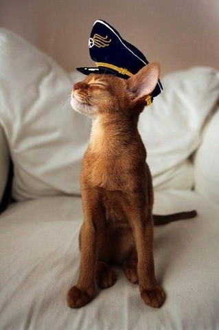 Captain Kitty ready to sail -MissMeowni.com