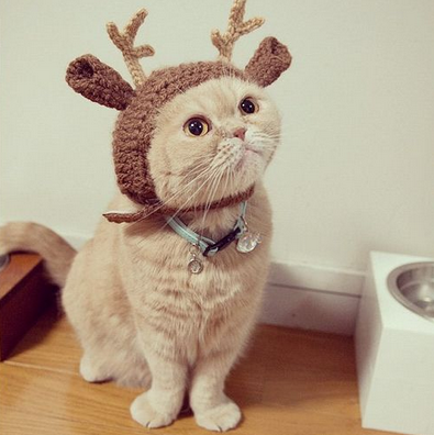 cat is deer -MissMeowni.com