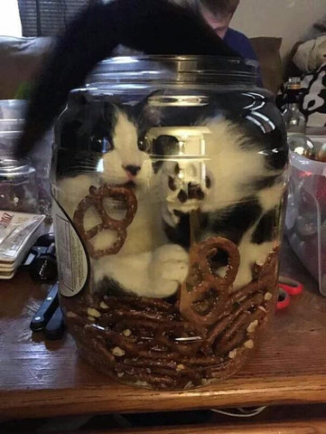 cat wants pretzels -MissMeowni.com