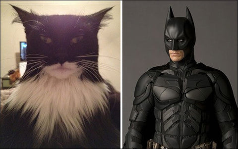 Batman as a cat -MissMeowni.com