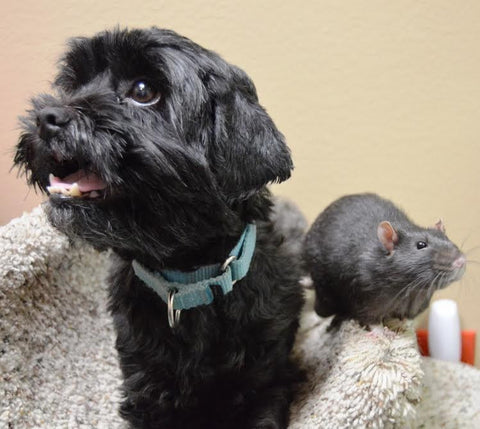 dog loves his rat -MissMeowni.com