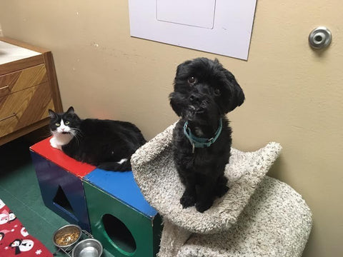 cat dog and rat -MissMeowni.com