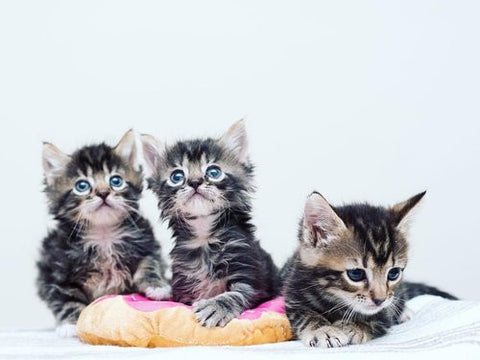 I love kittens -MissMeowni.com