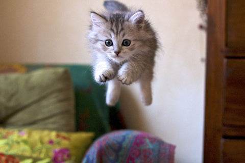 cute jumping kitten -MissMeowni.com