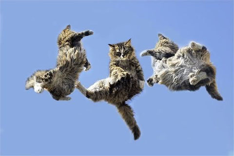 three amigos jumping cats -MissMeowni.com