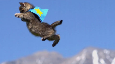 superhero kitty can fly -MissMeowni.com
