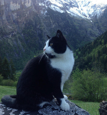 Swiss Cat Guide -MissMeowni.com