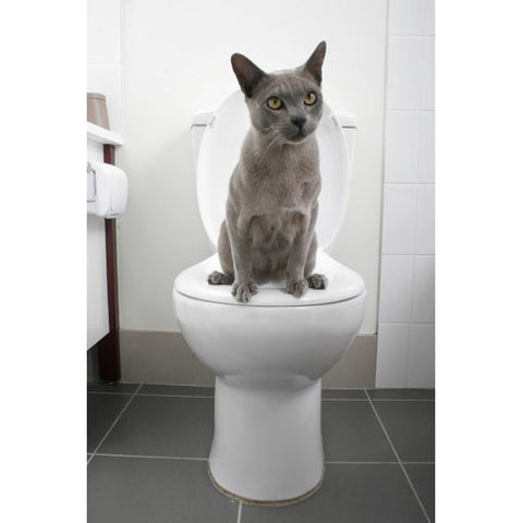 cat is potty trained -MissMeowni.com
