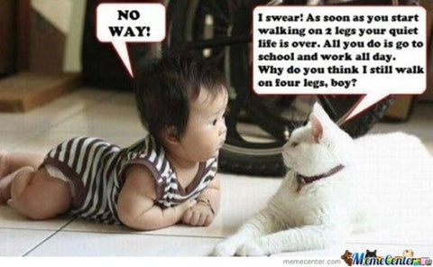 cat teaches baby- MissMewoni.com