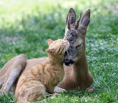cat and deer bff -MissMeowni.com