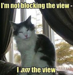 cats never block the view -MissMeowni.com