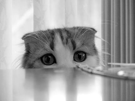 cute shy cat -MissMeowni.com
