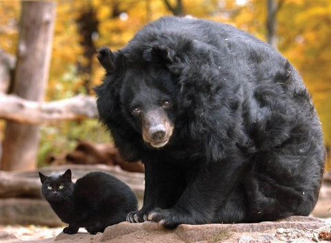 cat and bear bff -MissMeowni.com