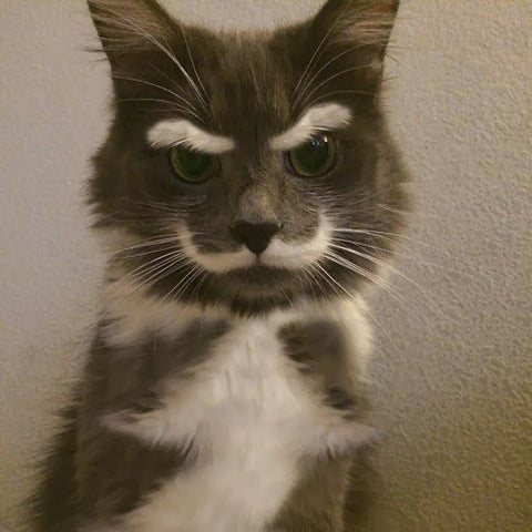 cat with mustache -MissMeowni.com