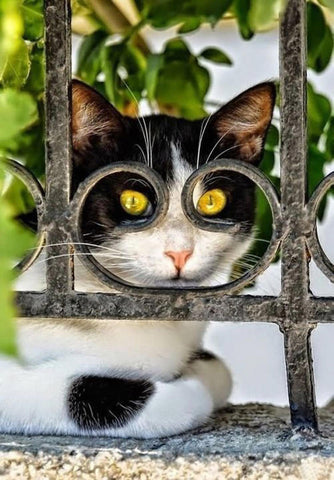 cat looking through fence -MissMeowni.com