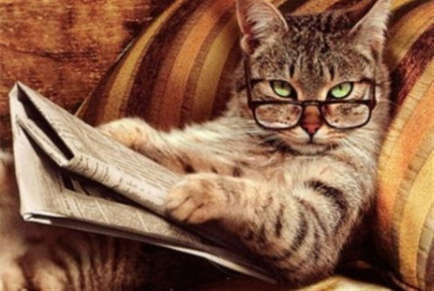 smart cat reading newspaper-MissMeowni.com