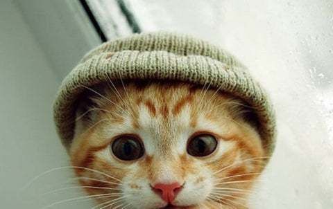 cute kitten with hat -MissMeowni.com