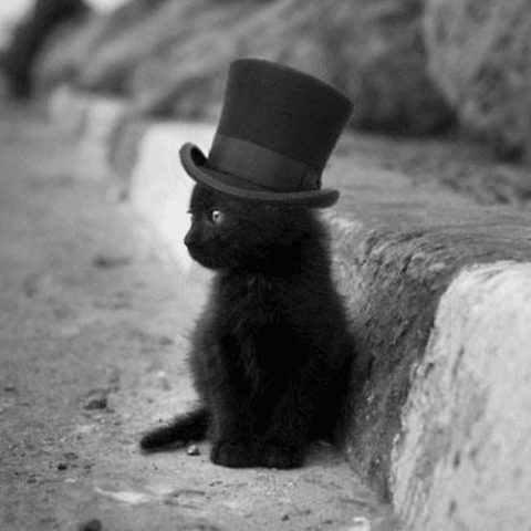 kitten in the hat -MissMeowni.com