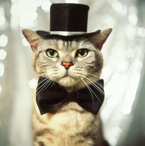 sassy cat in the hat -MissMeowni.com