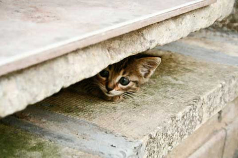 cute hiding kitten -MissMeowni.com
