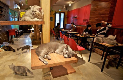 more cat cafes please -MissMeowni.com