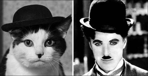 Chaplin Cat spot on -MissMeowni.com
