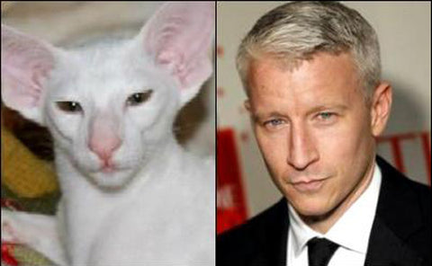 Anderson Cooper as cat -MissMeowni.com