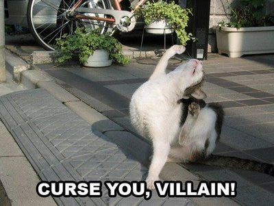 curse you Cat -MissMeowni.com
