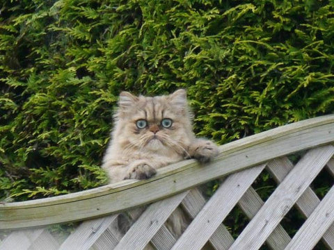 cat doesn't like neighbors -MissMeowni.com