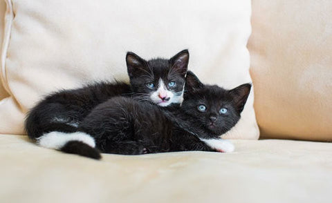 precious kittens need love -MissMeowni.com