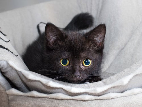 Munchkin is so adorable -MissMeowni.com